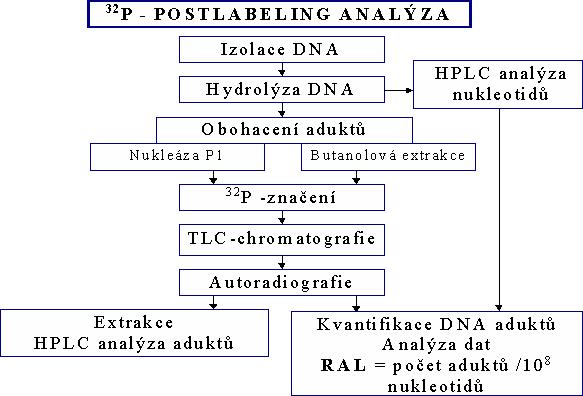 DNA_adukty-1