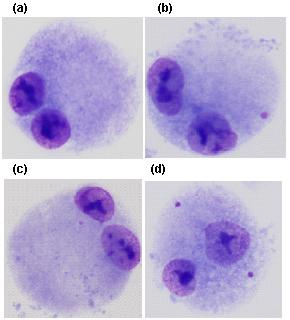 DNA_adukty-2